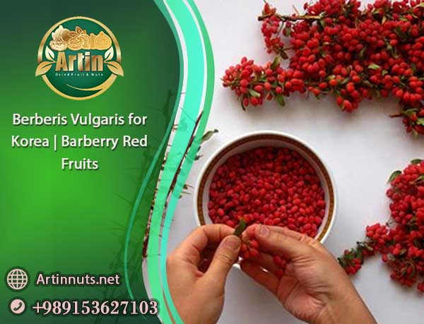 Berberis Vulgaris for Korea