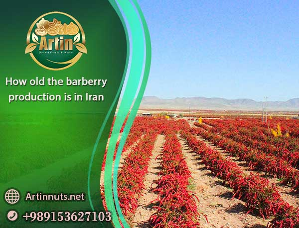 barberry production in Iran