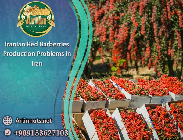 Iranian Red Barberries