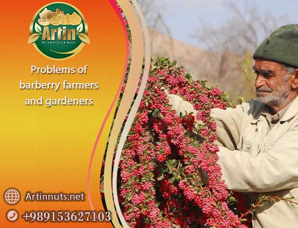 barberry farmers gardeners