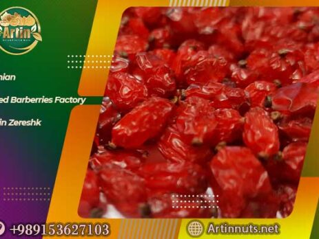 Iranian Dried Barberries Factory