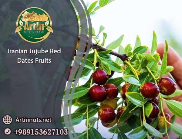 Jujube Red Dates of Iran