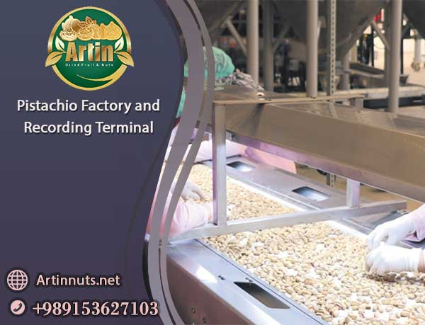Pistachio Factory and Terminal
