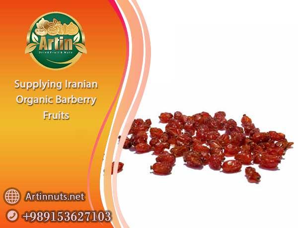Supplying Iranian Organic Barberry