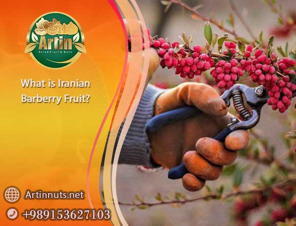 Iranian Barberry Fruit