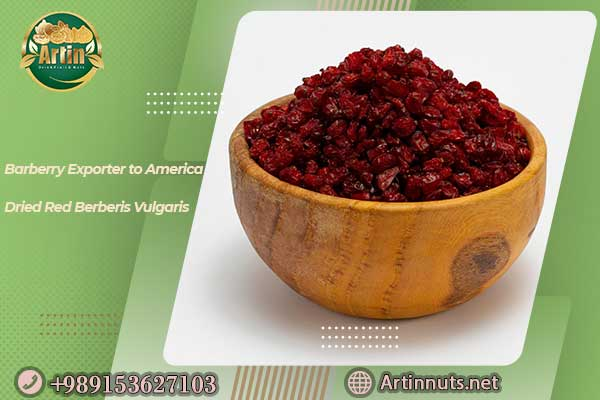 Barberry Exporter to America