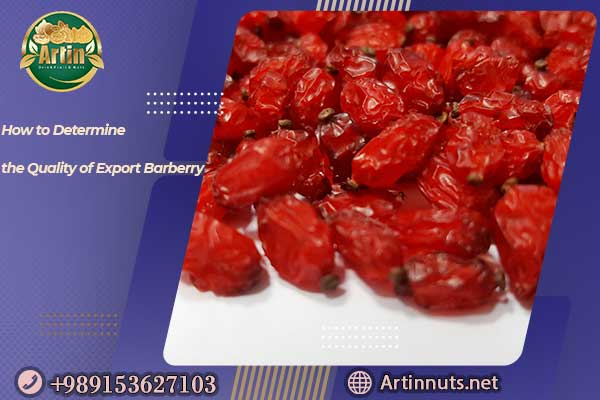 Quality of Export Barberry