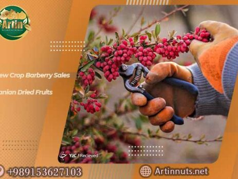 New Crop Barberry Sales