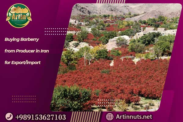 Buying Barberry from Producer