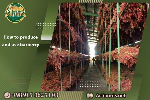 How to produce and use barberry