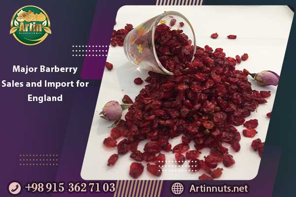 Major Barberry Sales and Import for England