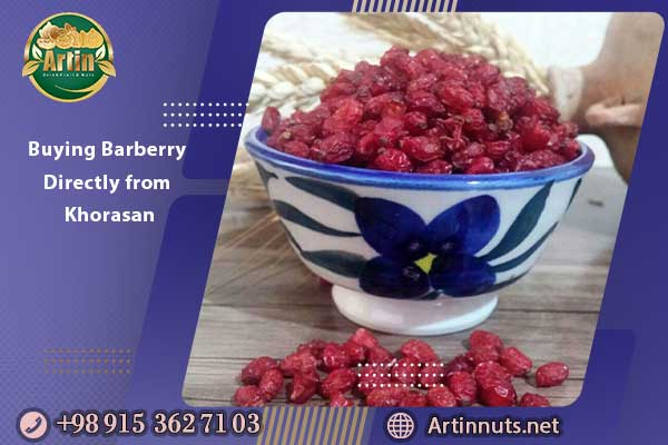 Buying Barberry Directly from Khorasan