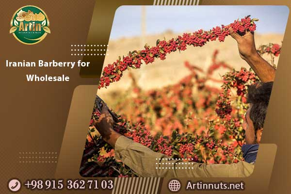 Iranian Barberry for Wholesale