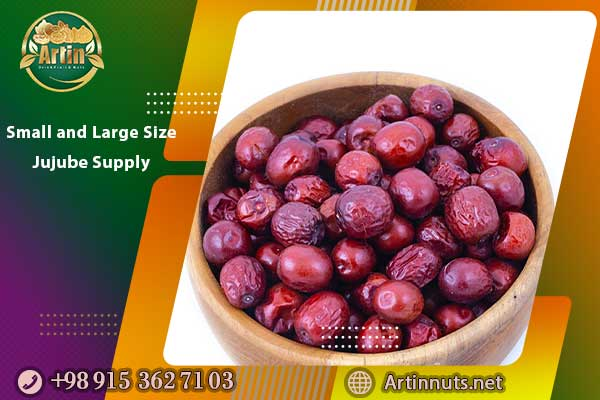 Small and Large Size Jujube Supply