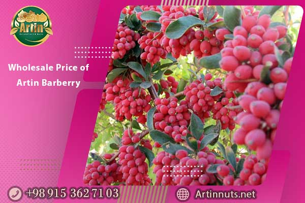 Wholesale Price of Artin Barberry