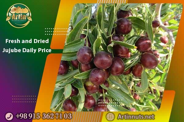 Fresh and Dried Jujube Daily Price