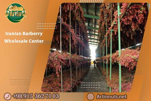 Iranian Barberry Wholesale Center