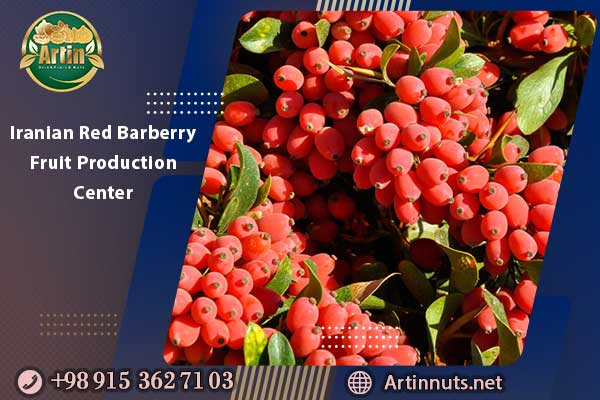 Iranian Red Barberry Fruit Production Center