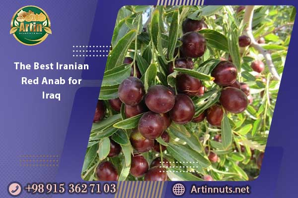 The Best Iranian Red Anab for Iraq