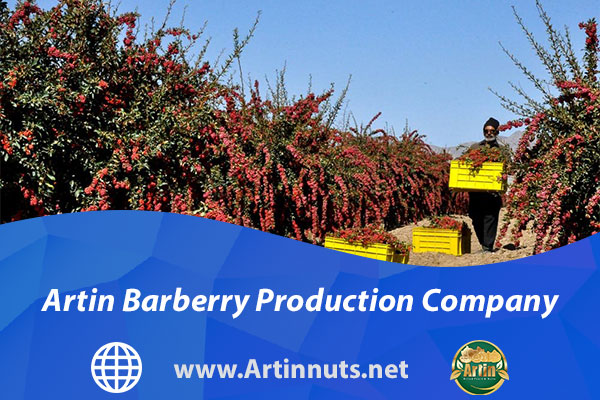 Artin Barberry Production Company
