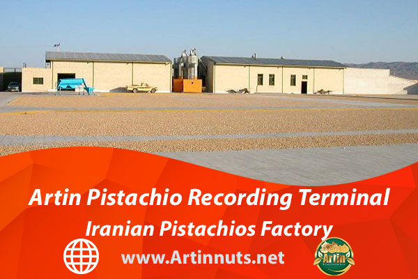 Artin Pistachio Recording Terminal   Iranian Pistachios Factory