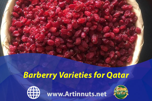 Barberry Varieties for Qatar