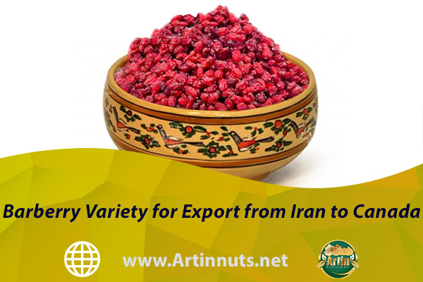 Barberry Variety for Export from Iran to Canada