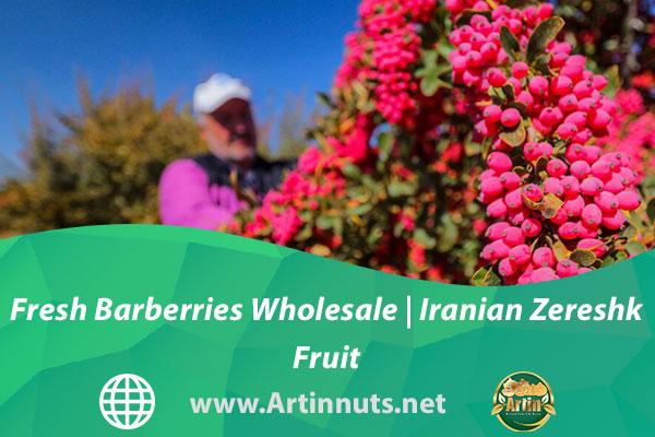 Fresh Barberries Wholesale | Iranian Zereshk Fruit