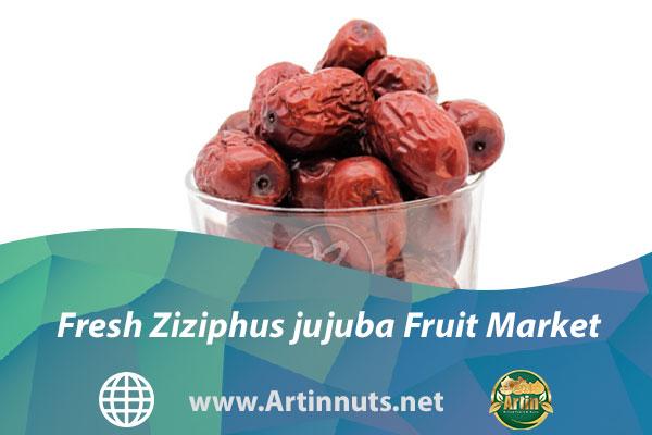Fresh Ziziphus jujuba Fruit Market