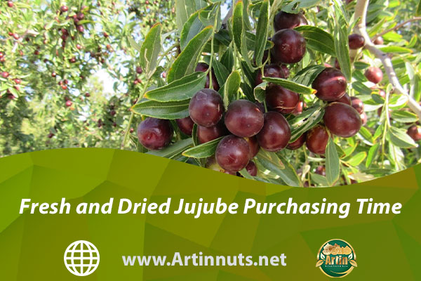 Fresh and Dried Jujube Purchasing Time