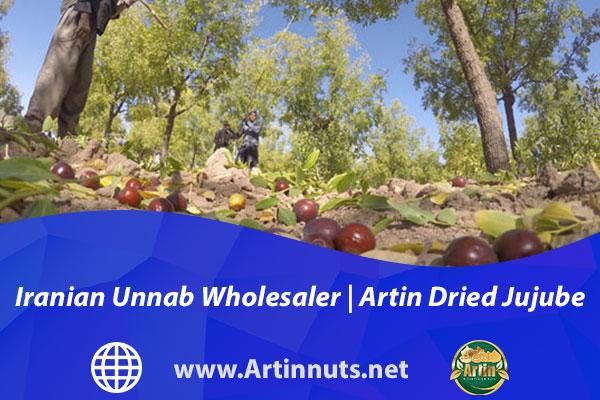 Iranian Unnab Wholesaler | Artin Dried Jujube Fruits