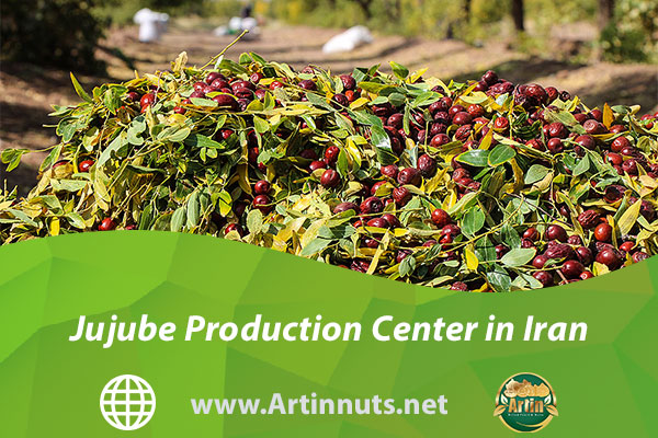 Jujube Production Center in Iran