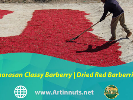 Khorasan Classy Barberry | Dried Red Barberries