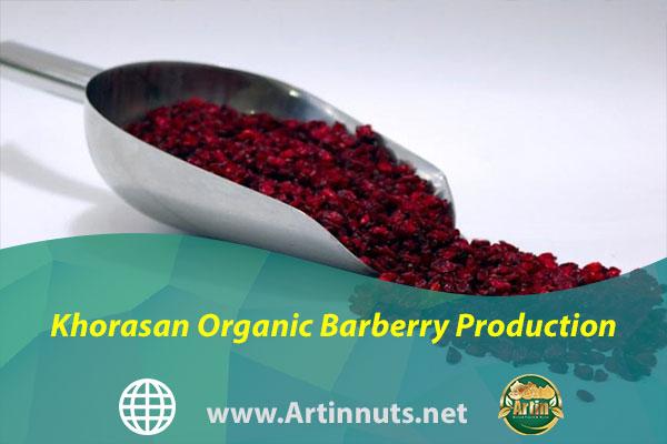 Khorasan Organic Barberry Production