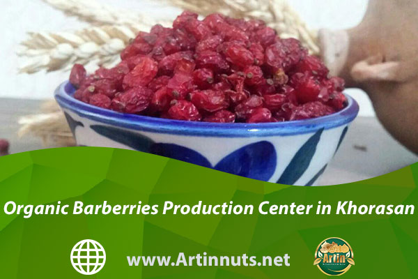Organic Barberries Production Center in Khorasan