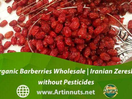 Organic Barberries Wholesale | Iranian Zereshk without Pesticides