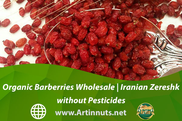 Organic Barberries Wholesale   Iranian Zereshk without Pesticides