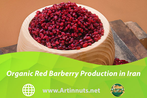 Organic Red Barberry Production in Iran