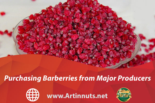 Purchasing Barberries from Major Producers