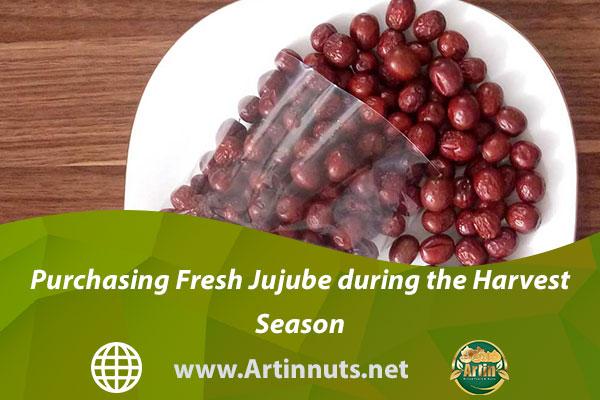 Purchasing Fresh Jujube during the Harvest Season