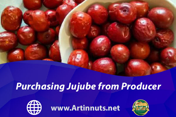 Purchasing Jujube from Producer