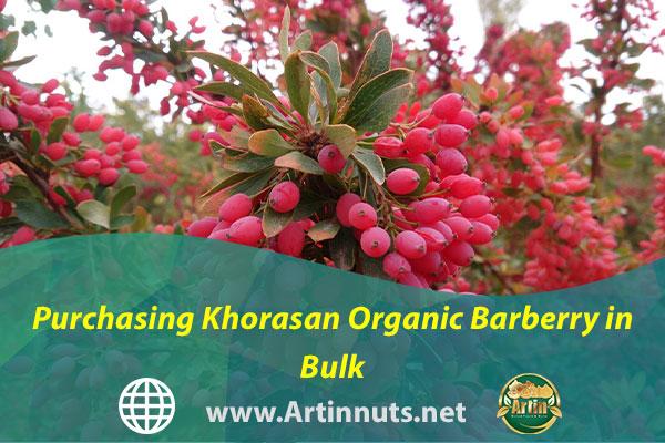 Purchasing Khorasan Organic Barberry in Bulk